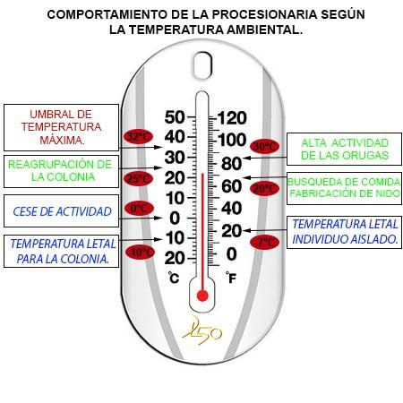 Temperaturas que eliminan la procesionaria del pino.